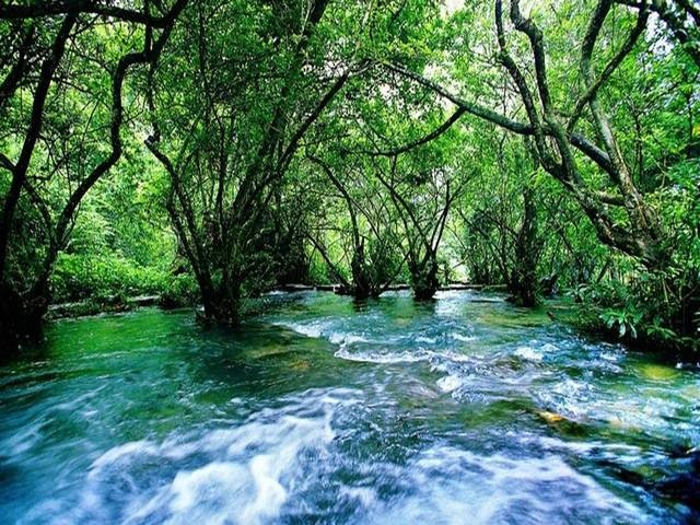 荔波不仅有石上森林,还有风景柔美的水上森林.图片
