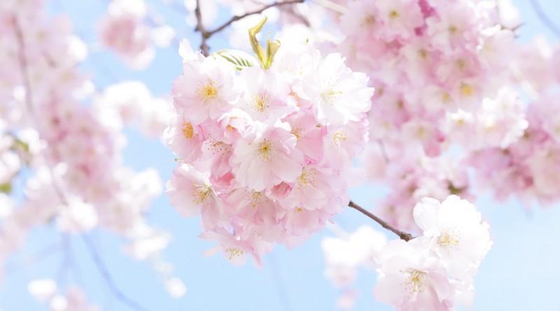 西安日语培训课程
