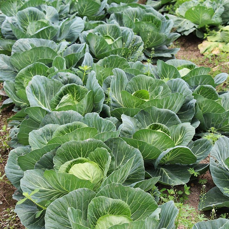 有机蔬菜3.jpg