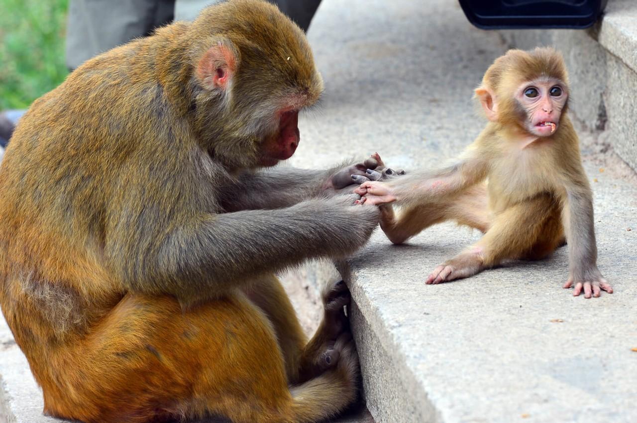 济南野生动物世界小猕猴.jpg