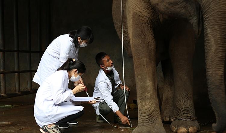 野象谷-给大象测量身高.JPG