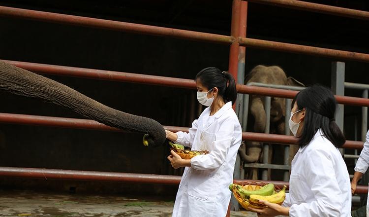 大象喂食.jpg