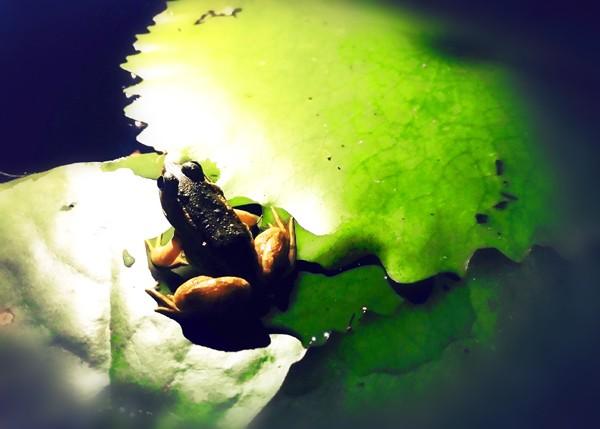 """湿地""""绿光""""越夜越美!"""