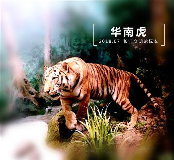 a04 华南虎.jpg