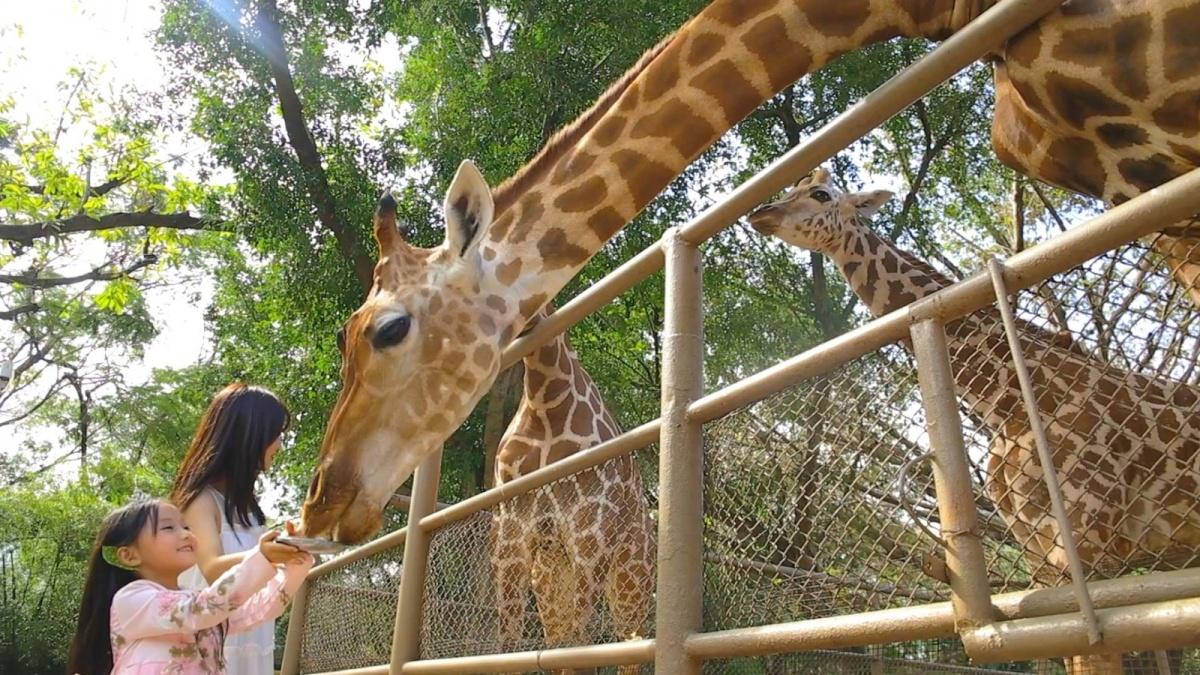 长颈鹿4.jpg