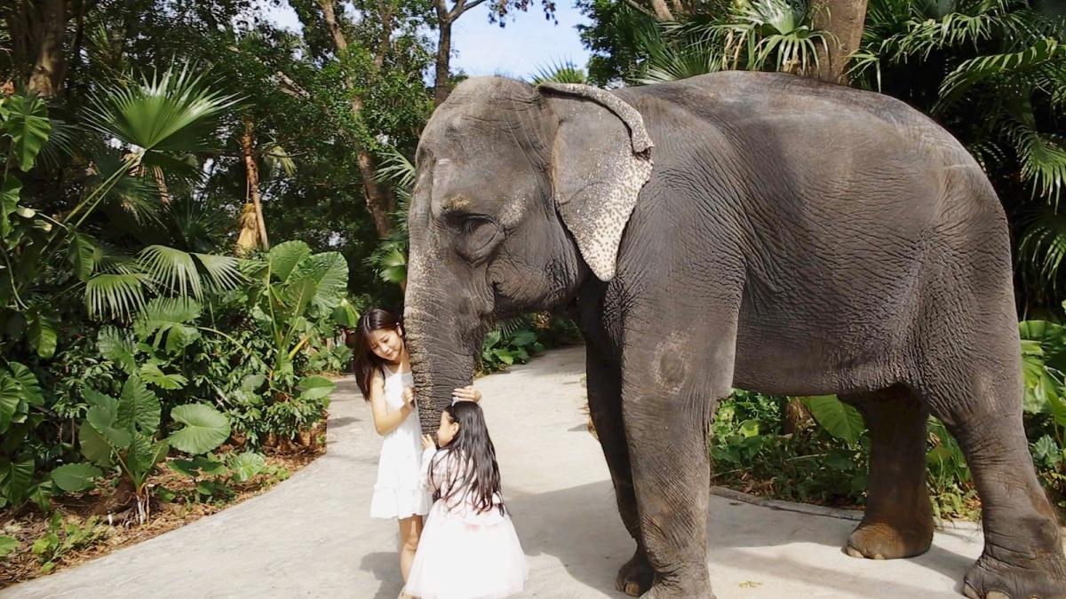 大象4.jpg