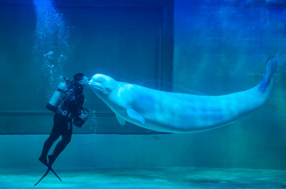 白鲸表演5.png