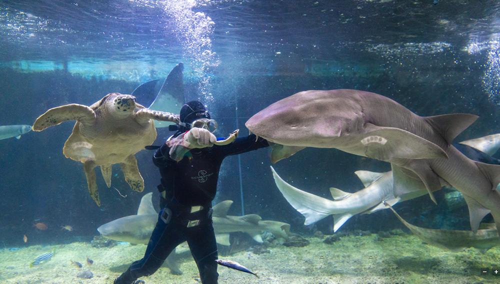 鲨鱼喂食2(2M以下).png