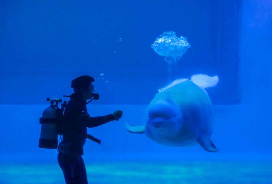 白鲸表演3.png