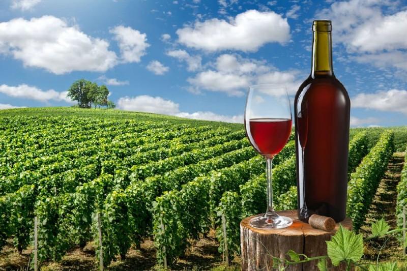 葡萄酒加盟农庄