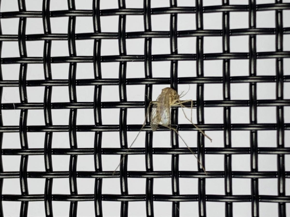 電循磁蚊子1.jpg