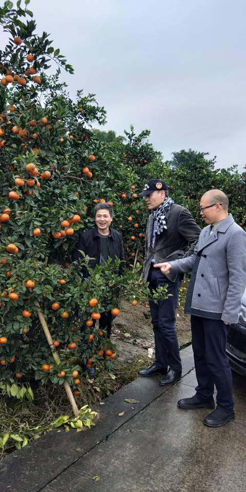 曹晓明监事会主席查看锦橙公司标准示范园内柑橘生长情况.jpg