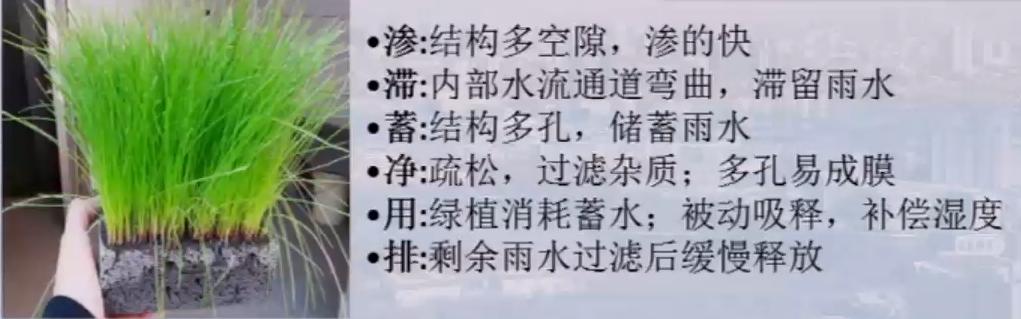 """蓄保水植被基材——地上""""海绵"""""""