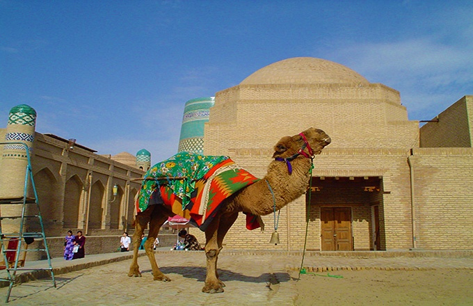 骆驼.jpg
