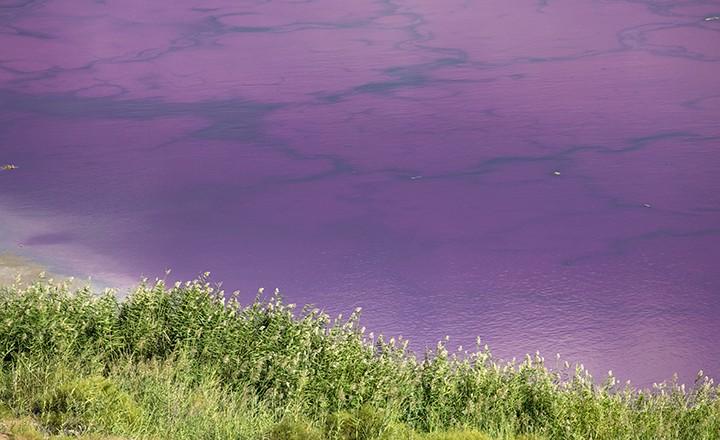 粉湖.jpg