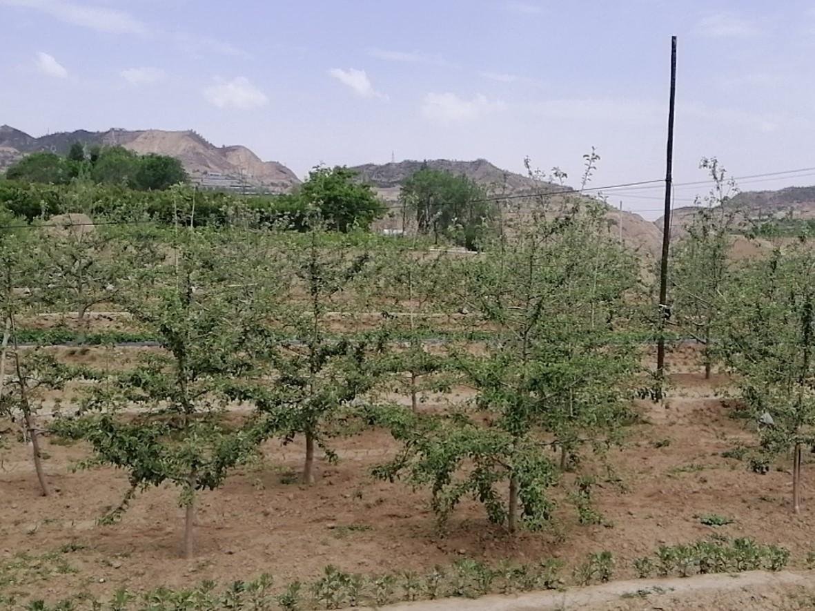果树20200518.3.jpg