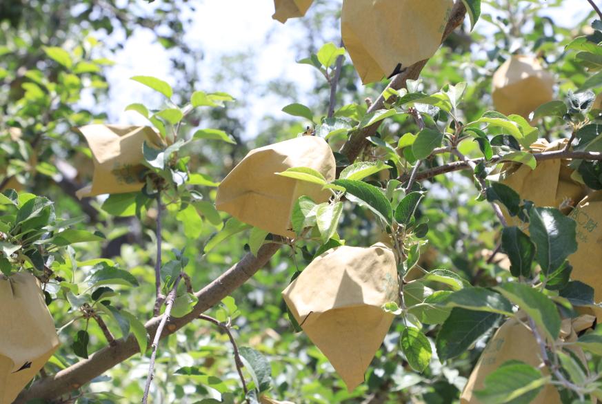 果树2.png