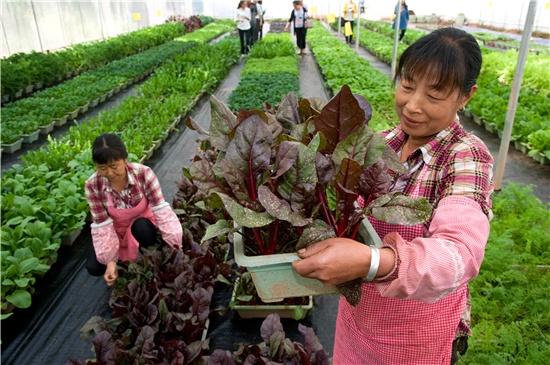 生态蔬菜受欢迎 (1).jpg