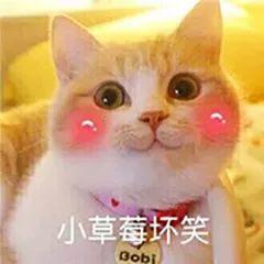 猫咪坏笑1.jpeg