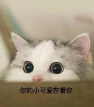 猫.png
