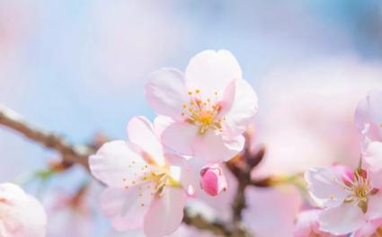 商业 | 盈石:春暖花开,黎明将至,人间皆安