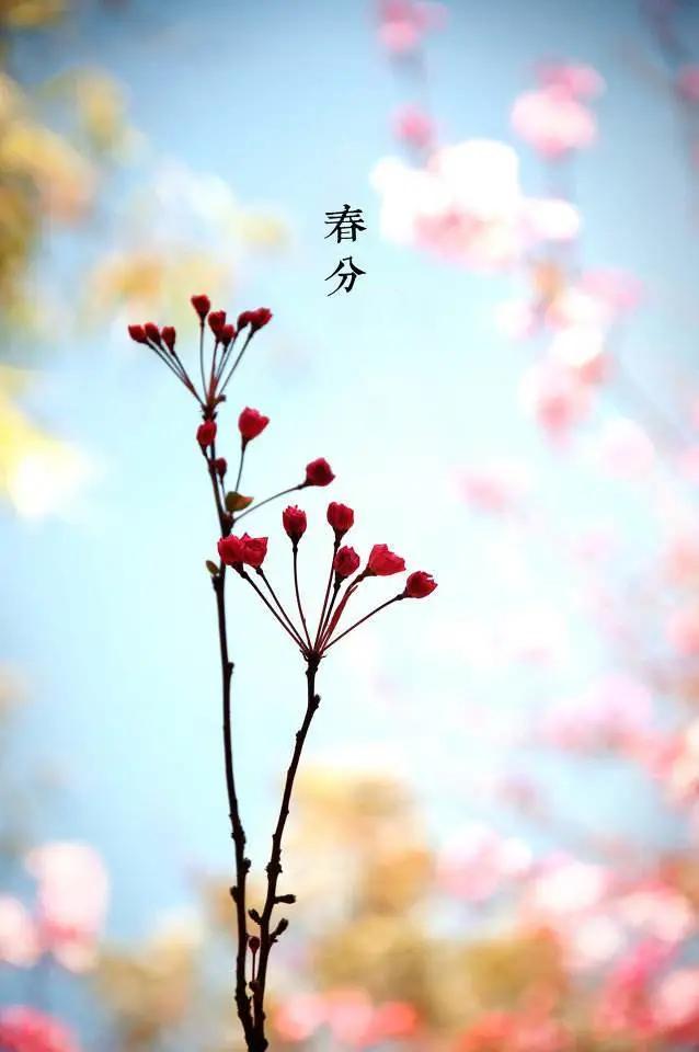春分1.png