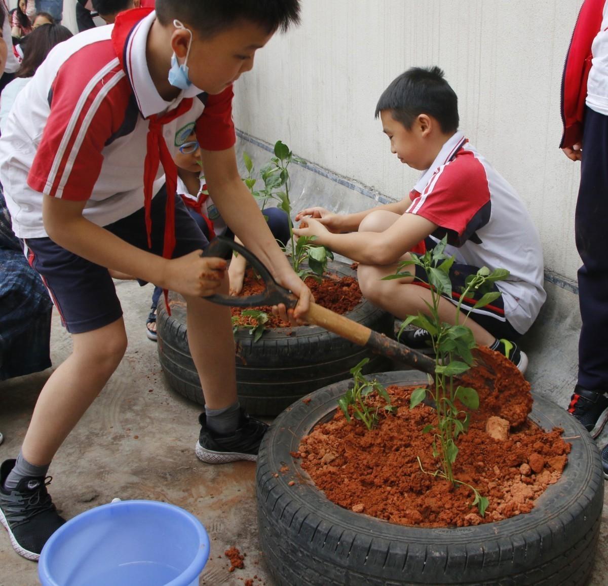 小小秧苗,大大希望——澳门新葡新京小学部蔬菜实践园开园记