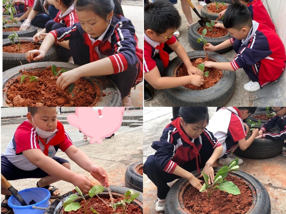 蔬菜6.jpg