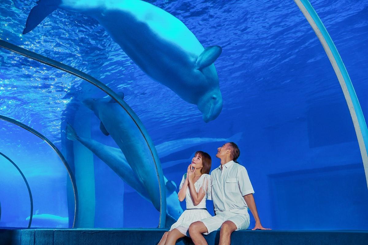 白鲸之恋.jpg