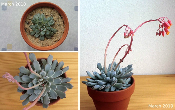 rescue-plants-before-after-photos-19-5e53f236f11c0__700.jpg