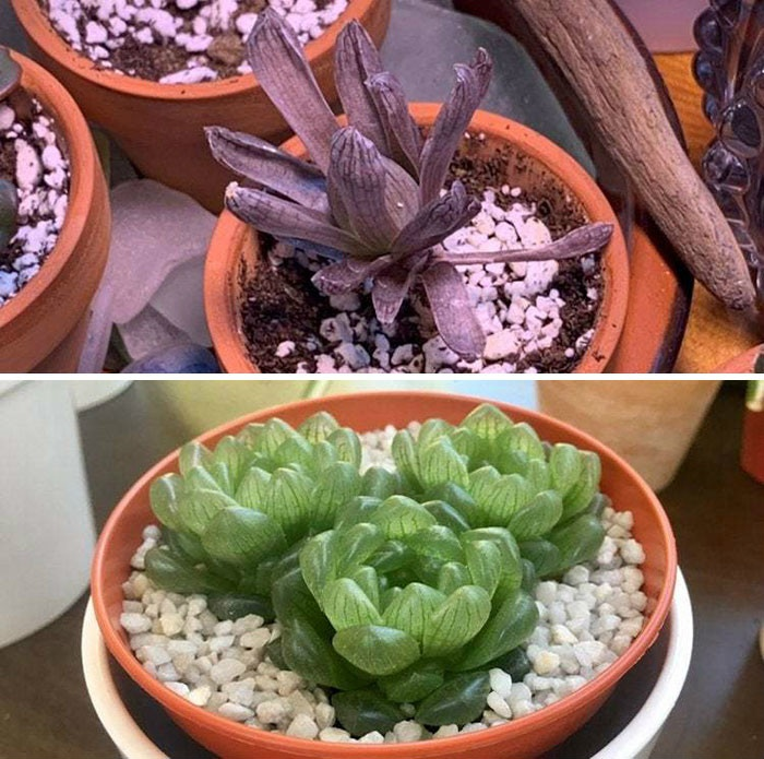 rescue-plants-before-after-photos-12-5e53c74fd64bf__700.jpg