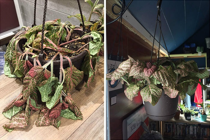rescue-plants-before-after-photos-10-5e53c5a543ab2__700.jpg