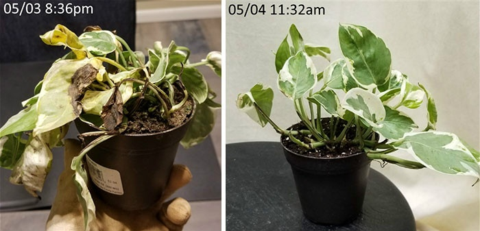 rescue-plants-before-after-photos-5-5e53c36ef405b__700.jpg