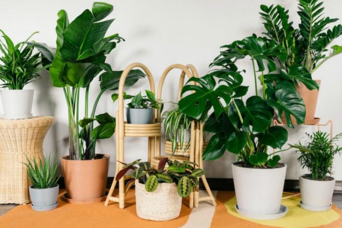 20190530_Beginner_Plants_0007_meitu_3.jpg