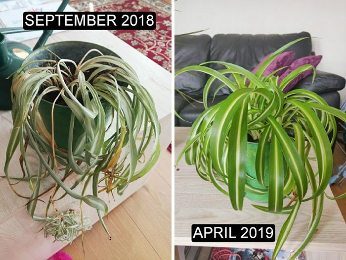 rescue-plants-before-after-photos-7-5e53c466db81d__700.jpg