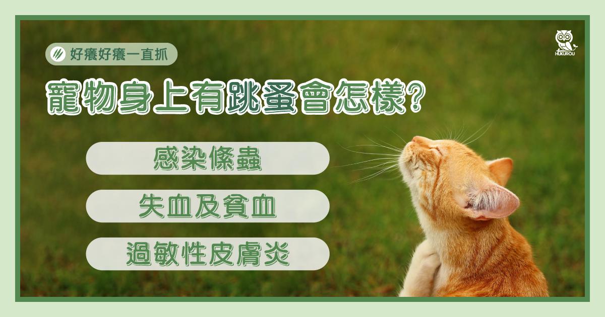 寵物身上有跳蚤會怎樣?三個造成毛小孩的健康影響