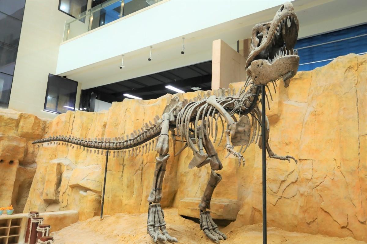 恐龙研究所· (7).JPG
