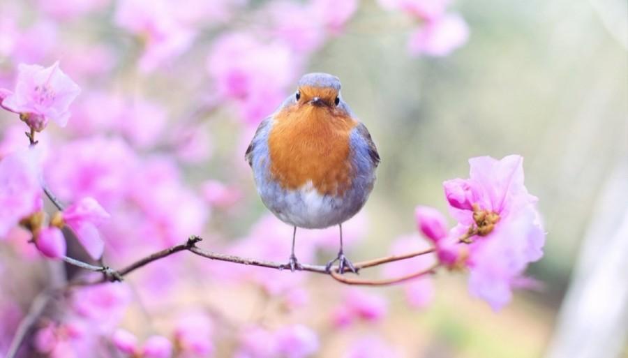beautiful-bird-bloom-blossom-414181.jpg