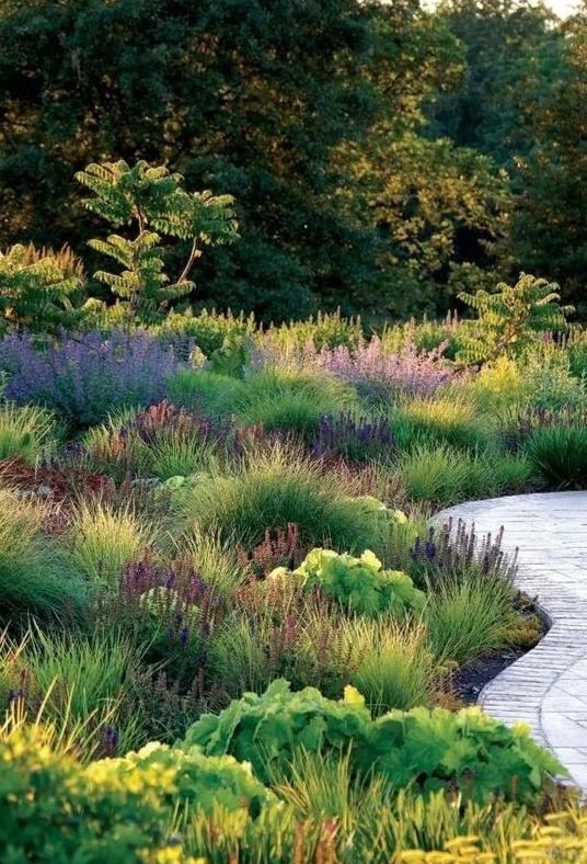 极具美感的镶边地被植物